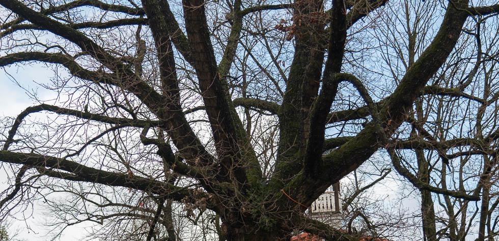 Mein Stambaum